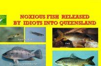 Pest Fish